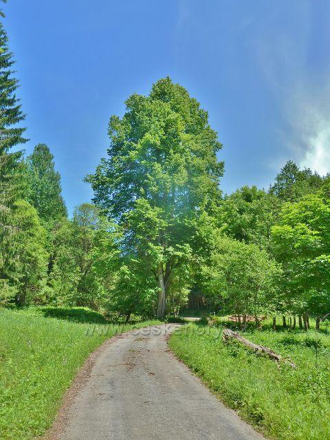 Silnička Adamovským údolím před rozcestím Potok Telčava