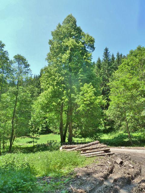 Adamovské údolí - rozcestí Potok Telčava z něhož vede neznačená cesta k rozcestí U Líp na červené TZ