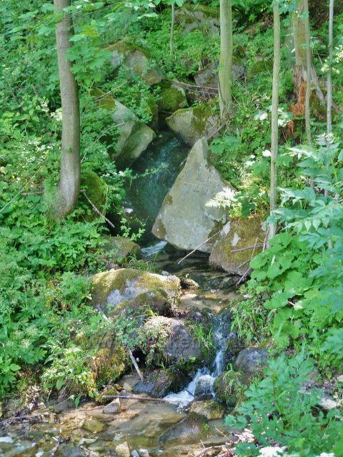 Vápenná - potok nad osadou Paseky pramení na úbočí Žulového vrchu