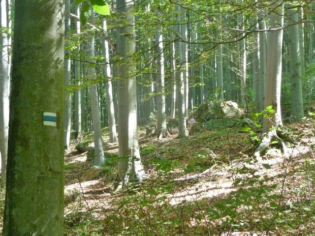 Vápenná - kamenitý lesní porost podél cesty k rozcestí Paseky