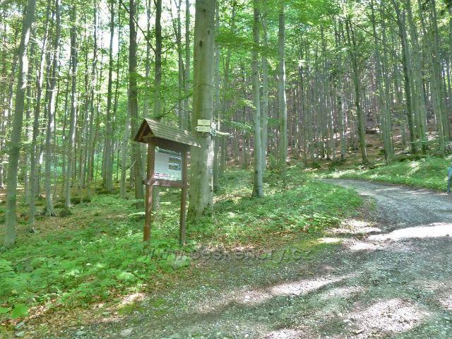 Vápenná - rozcestí Paseky na trase po modré TZ  k Žulovému vrchu
