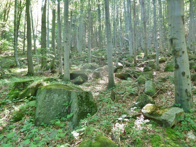 Vápenná - kamenitý svah Jasanového vrchu po kterém stoupá cesta po modré TZ k Žulovému vrchu