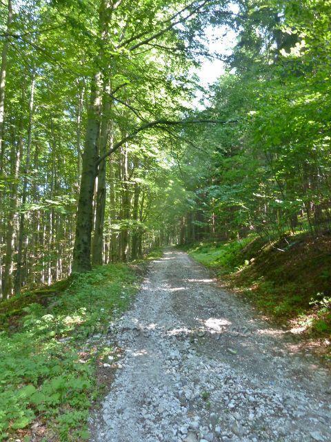 Vápenná - cesta po modré TZ k Žulovému vrchu