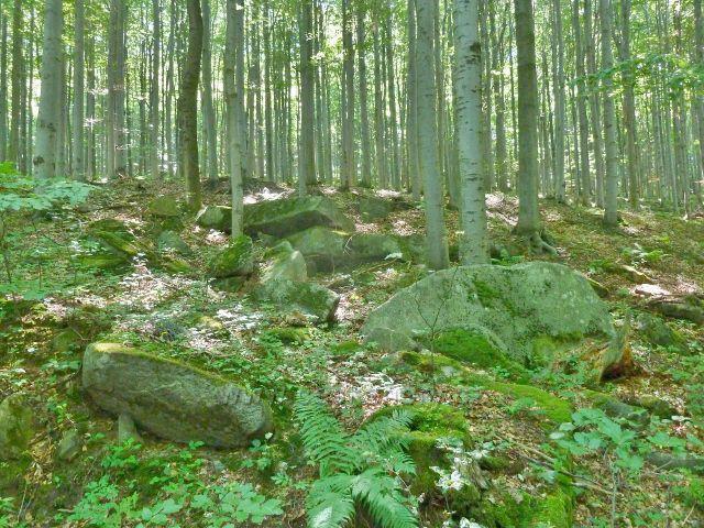 Vápenná - kamenitý svah Jasanového vrchu