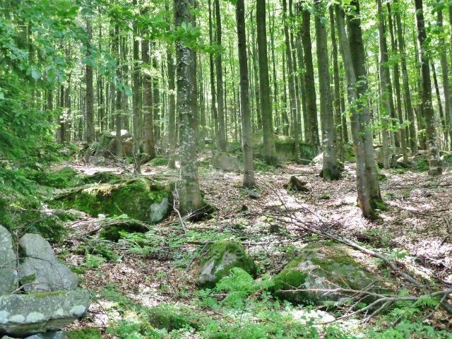 Vápenná - kamenité úbočí vrchu Na Radosti