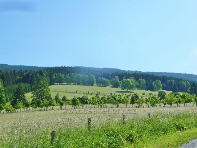 Nové Losiny - pohled od Přemyslovského sedla na Slunnou stráň