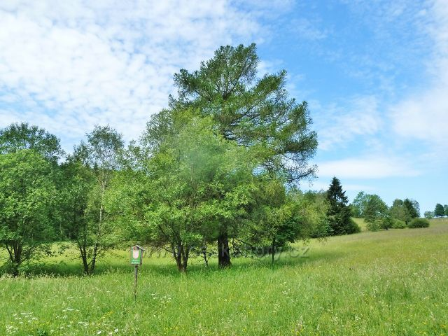 Loučná - Přírodní rezervace Přemyslovské sedlo