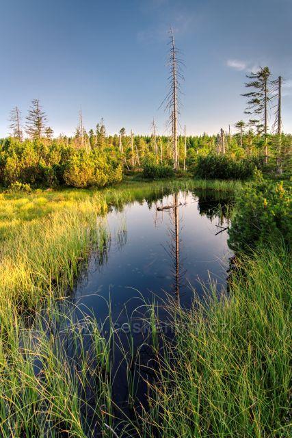 Černá jezírka - přírodní rezervace