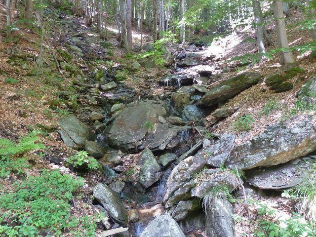 Loučná - lesní potok na úbočí vrchu Černá stráň