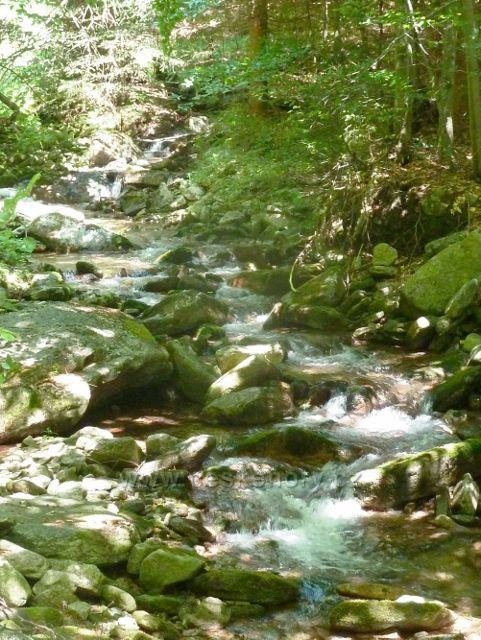 Kouty n.D. - Poniklý potok