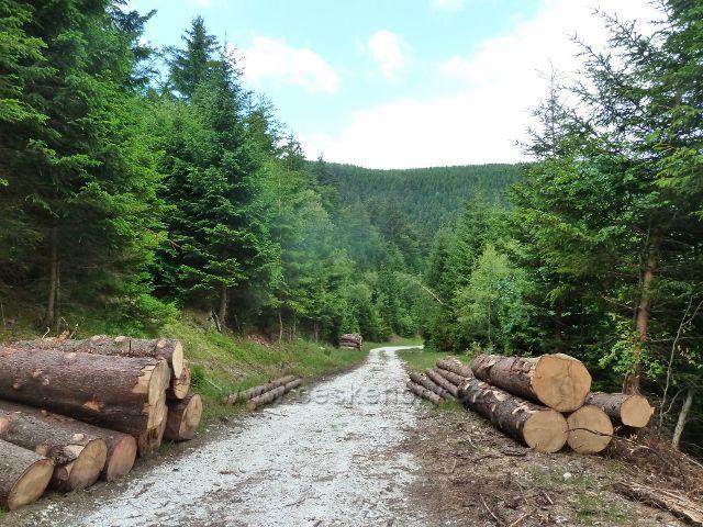Horní Lipová - přiblížené dřevo u cyklostezky 6208 pod Lučním vrchem