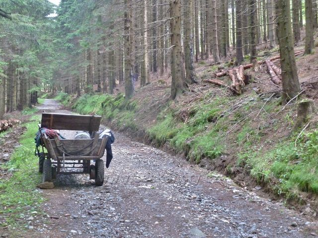 """Ramzová - přibližování dřeva koněm z probírky pod Ramzovskou chatou, koňský """"vozík"""""""