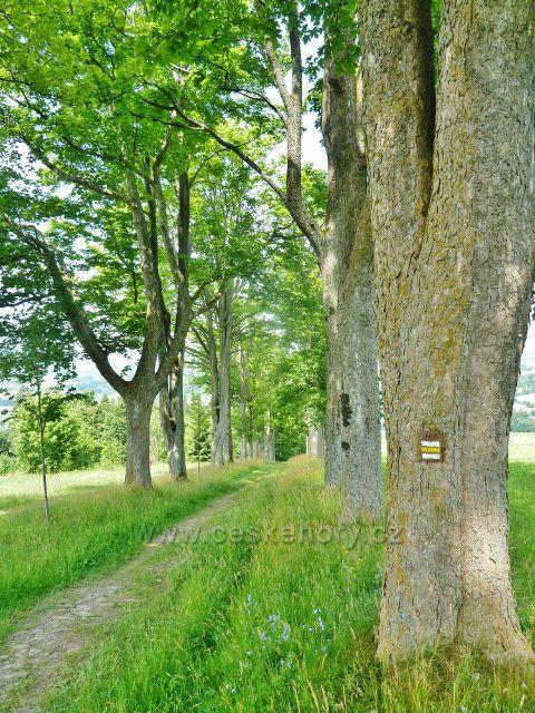 Horní Hedeč - žlutá TZ od kláštera do Králík vede klášterní alejí