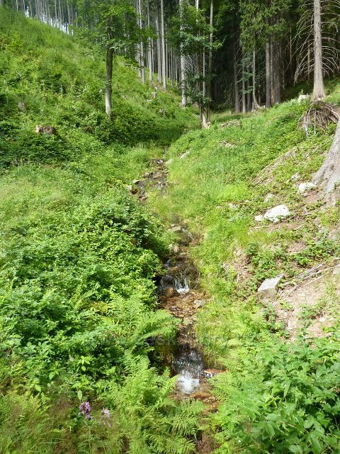 Hynčice p.Sušinou - přítok Chrastického potoku v Bučině