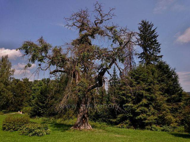 v parku nejhezčí strom