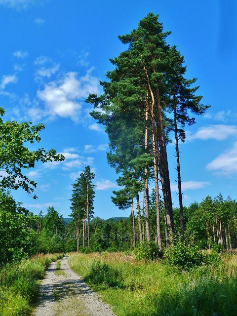 Bystřice n.Olší - cesta po modré TZ z Borku pod Malý Kozinec