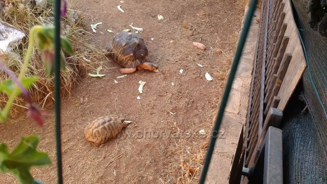 Želví farma naši domácí u které jsme byli ubytovaný