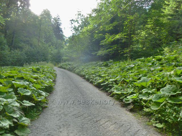 Silnička podél potoku Mazák je lemována listy devětsilu
