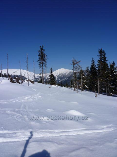 Sněžka z Hnědého vrchu