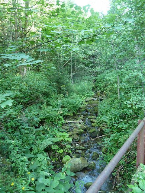 Suchý potok podél silničky k Butořance