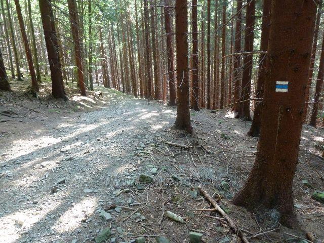 Cesta lesem po modré TZ na Butořanku
