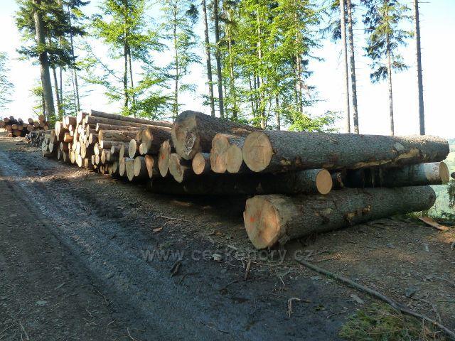 Dolní Morava - skládky dřeva na úbočí vrchu Slamník u cyklostezky 4371