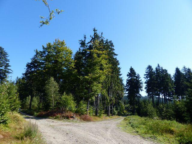 Malá Morava - rozcestí Hrubý les na trase po červené TZ ke sv. Trojici