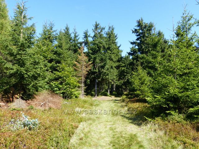 Horní Orlice - cesta po modré TZ z vrcholu Jeřábu k pramenu Tiché Orlice