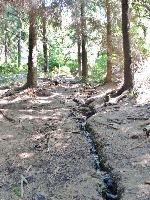 Horní Orlice - první metry toku Tiché Orlice od jejího pramenu