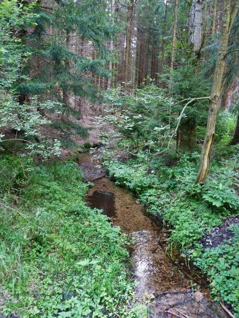 Horní Orlice - horní tok Tiché Orlice lesním porostem