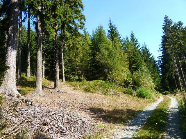 Horní Orlice - vrstevnicová cesta po níž vede zelená TZ vede po úbočí Lískovce. Zde je bod záchrany UO 001