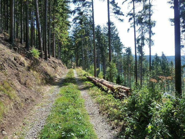 Horní Orlice - vrstevnicová cesta po zelené TZ  okolo Lískovce
