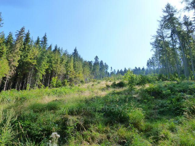Králíky - lesní porost na úbočí Lískovce