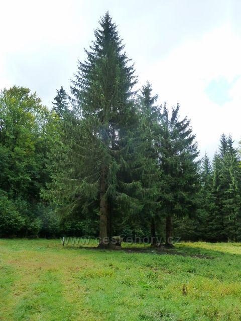 Újediště před posedem na lesní loučce u trasy po modré TZ do Kobylího dolu