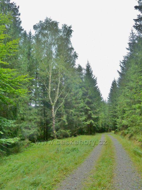 Jamné nad Orlicí - cesta po modré TZ do Hynkovic