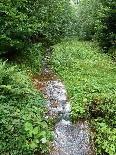 Jamné nad Orlicí - Černovický potok pod křižovatkou Kobylí důl