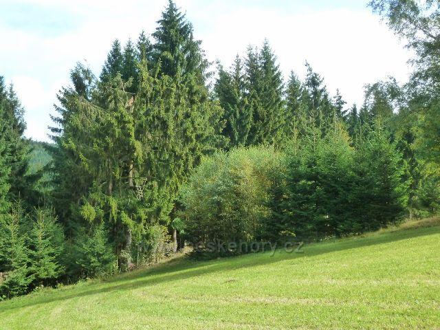Jamné nad Orlicí - posed na okraji lesa u trasy po žluté TZ z Kobylího dolu