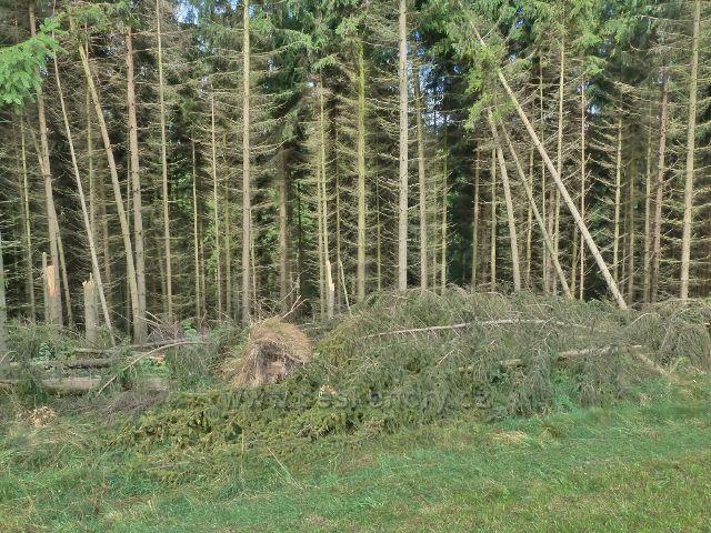 Jamné nad Orlicí - větrný polom na okraji lesa u trasy po žluté TZ do Jamného n.O.