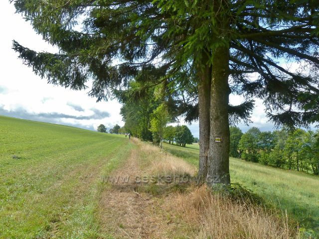 Jamné nad Orlicí - cesta po žluté TZ do dolní části obce