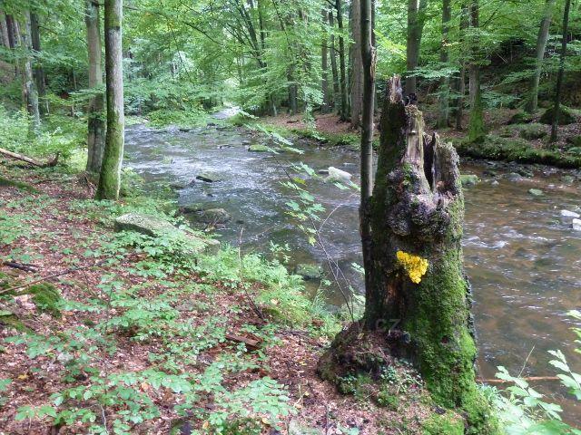 Rybná nad Zdobnicí - řeka Zdobnice