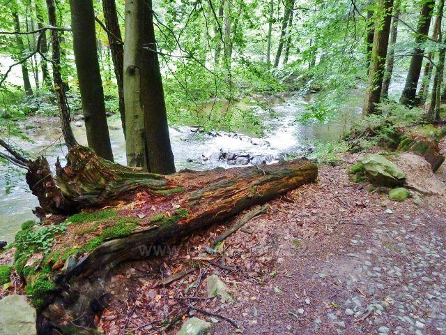 Vamberk - cesta po modré TZ podél Zdobnice z Pekelce do Libštejna