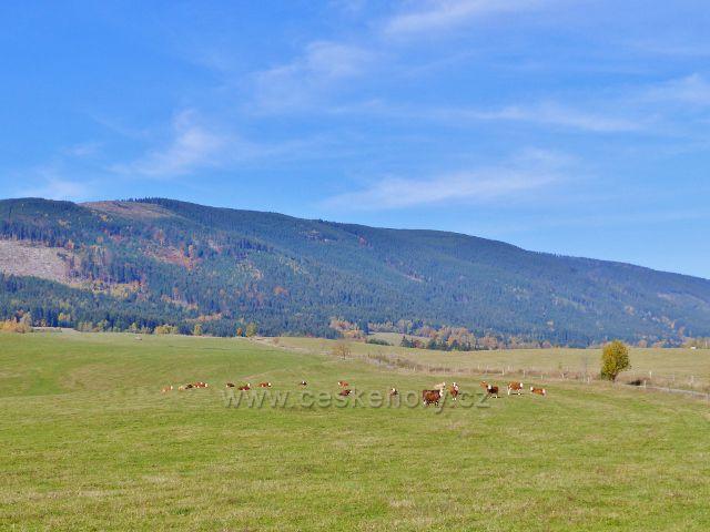 Chrastické podhorské pastviny