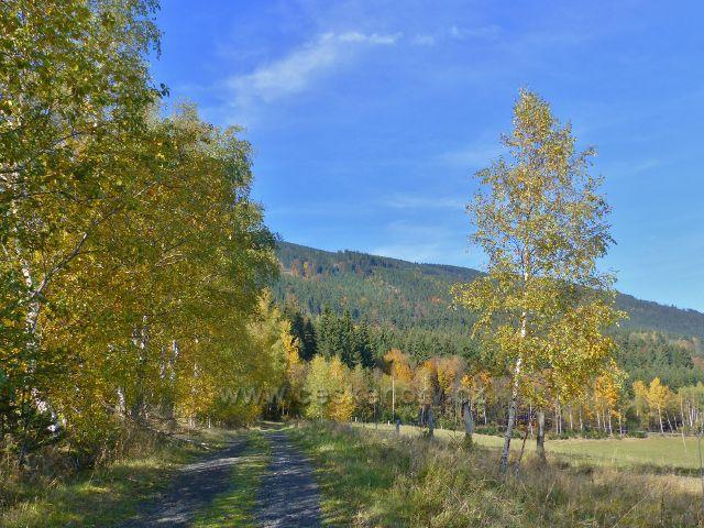 Hynčice pod Sušinou - cesta okrajem lesa z Chrastic