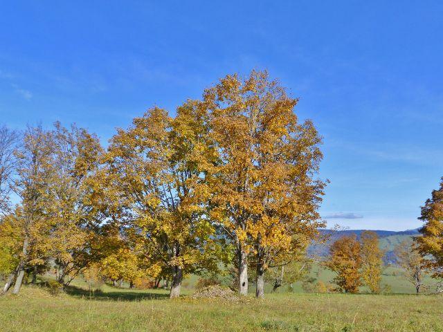 Hynčice pod Sušinou - barvy podzimu na hynčických pastvinách