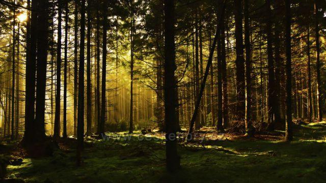 Šumava, les u Zvonkové, foto 30. 9. 2017