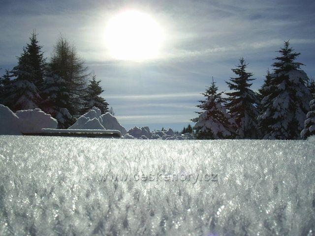 Jinovatka na sněhu - obora Fláje