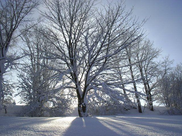 Strom pod sněhem - Český Jiřetín