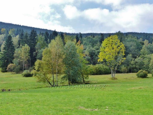 Loučná nad Desnou - přírodní rezervace Přemyslovské sedlo