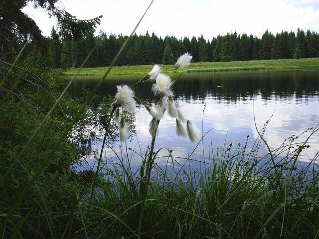 Mrtvý rybník za Božím Darem