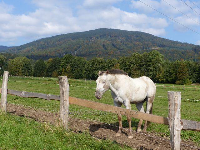 Loučná nad Desnou - pastva koní u ranče Mustang